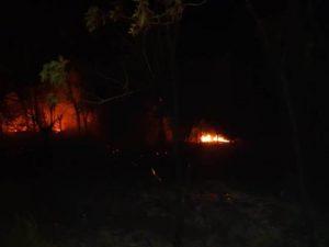kebakaran hutan, karhutlah, kebakaran hutan di pulau rimau