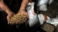 Komoditas Kopi, UPTD BPSMB Agro Bandung, Mutu Kopi, Sistem Resi Gudang, pengujian mutu barang agro