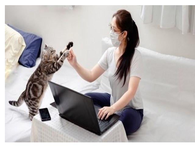 Solusi mengatasi alergi kucing, agar tidak alergi dengan kucing, kuncing oren, kocheng oren