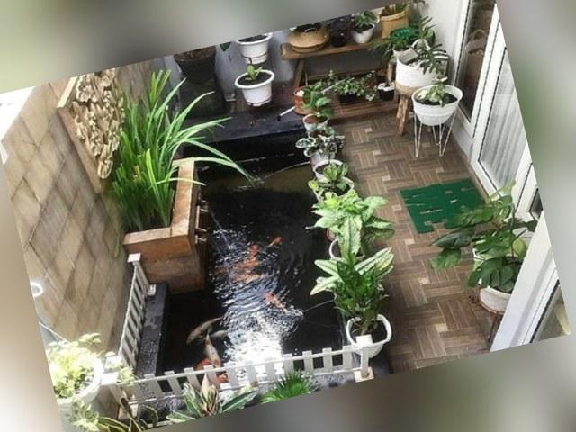 taman rumah di area sempit, taman rumah minimalis, tips membuat taman rumah