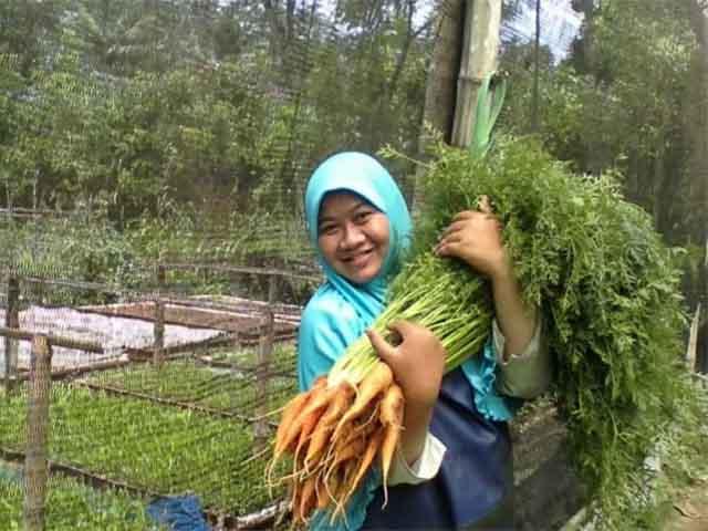 Kesegaran Sayuran Organik Menghilang
