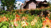 Wisata Taman Bunga Terpopuler di Indonesia
