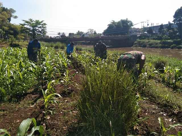 bantaran sungai menjadi kebun produktif