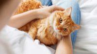 merawat kucing dengan maksimal