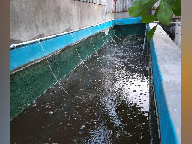 pembudi daya ikan air tawar